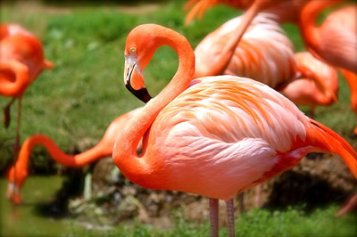 flamingos-zoo-miami