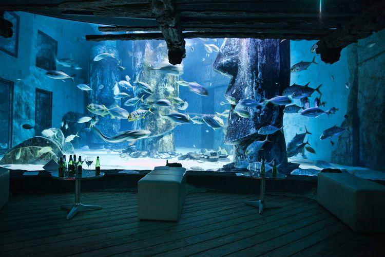 sealifeaquarium