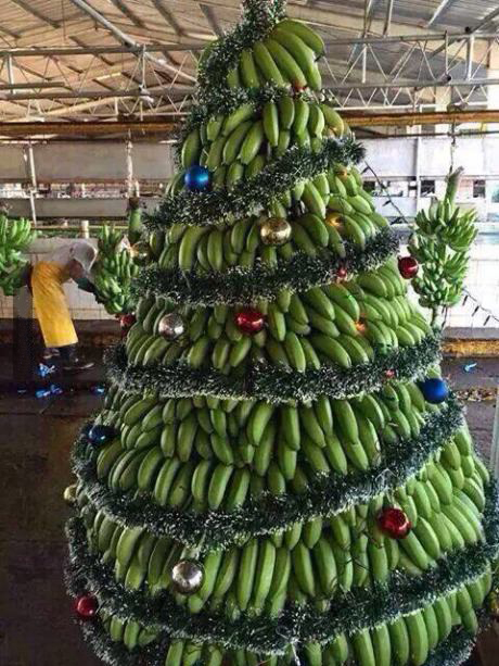 Which country decorates banana and mango trees instead of traditional fir Christmas  trees?Answer: India Instead of having traditional Christmas Trees, ... - Christmas Traditions Around The World - Easirent